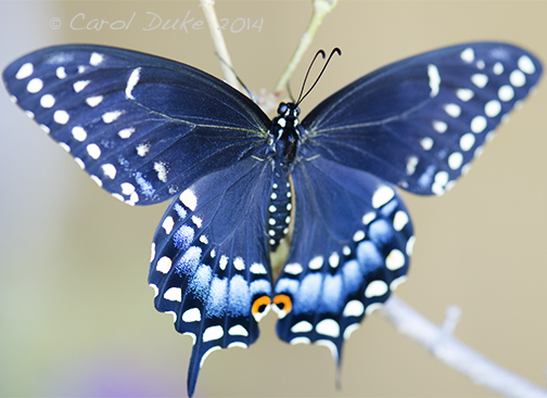 metamorphosis of butterflies from 2014 flower hill farm retreat